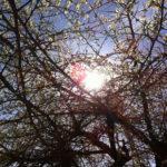 Zalige zon op Eyndevelde in de Vlaamse Ardennen vakantie