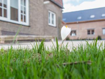 Eyndevelde bloem van de Vlaamse Ardennen zicht op de binnenkoer en omgeving