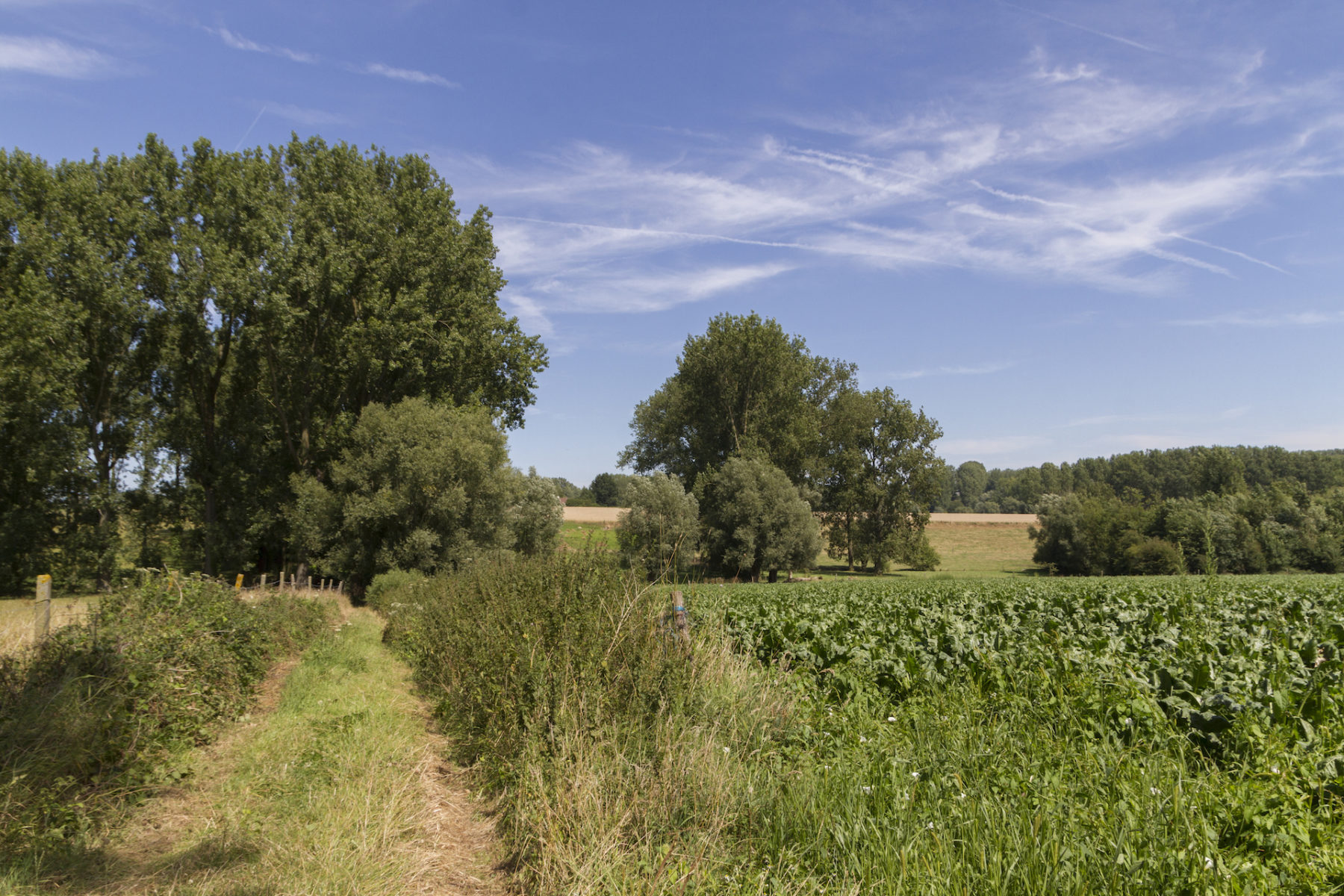 Wandelen in de groene omgeving van Eyndevelde